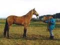 mankurt-munir-abrai-4-yr-old-stallion-aksakal-line