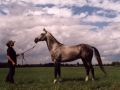 stallion-grog-gigant-gera-guelishikli-line-new